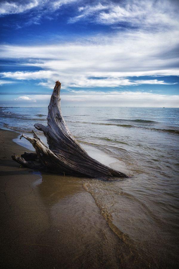Driftwood on the Shore of Lake Michigan thumbnail