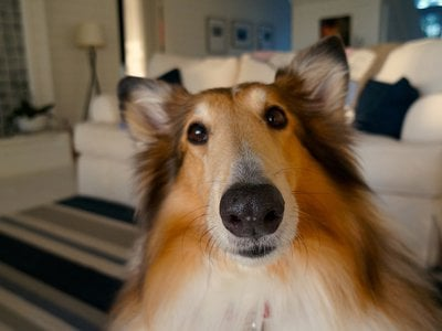 When they know humans are looking at them, dogs turn out to make a lot of facial expressions