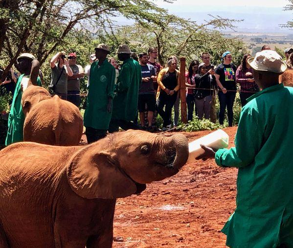 Feeding TIme at the Baby Elephant Orphanage thumbnail