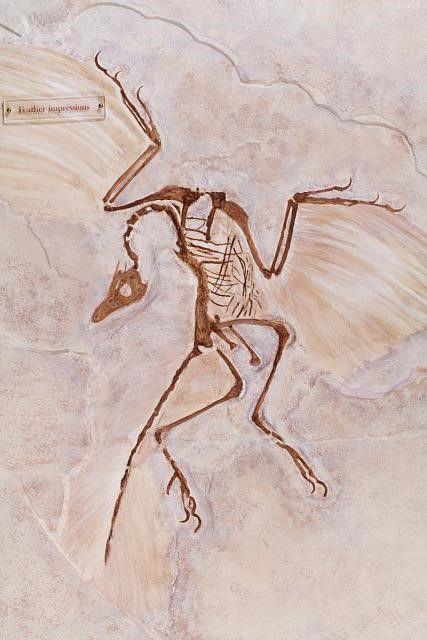 A small dinosaur skeleton in plaster.