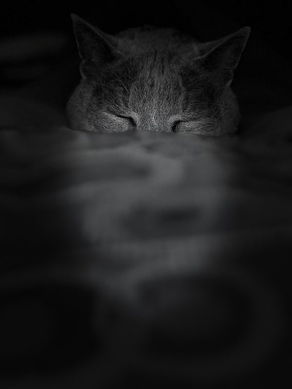 B&W of  Submerged cat  in Pillow thumbnail