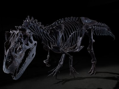 """The ecology of the meat-eaters like Allosaurus fragilis  were likely threatened by the decline of the plant-eating dinosaurs, making the """"perfect storm"""" for a mass extinction"""