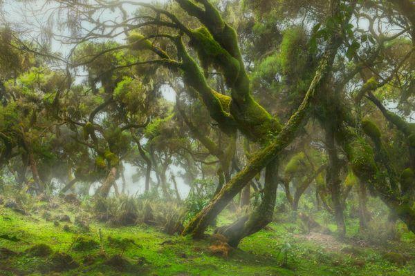 Harena forest thumbnail