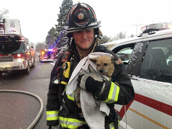 Veteran's Day Rescue thumbnail