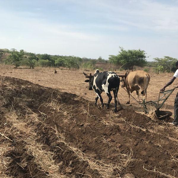 Smallholder farmers preparing a demonstration plot thumbnail