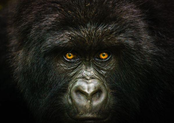Into the Congo thumbnail