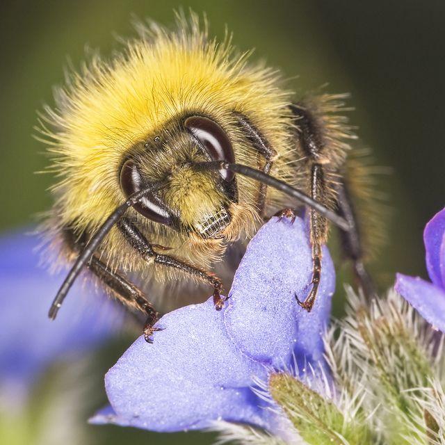2013102909203310_29_2013_bumblebee.jpg