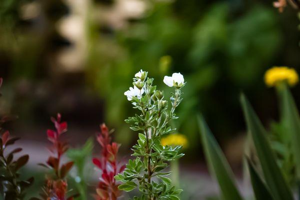 A flower  thumbnail
