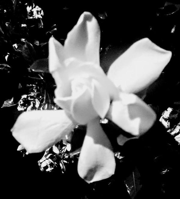 Night Flower thumbnail