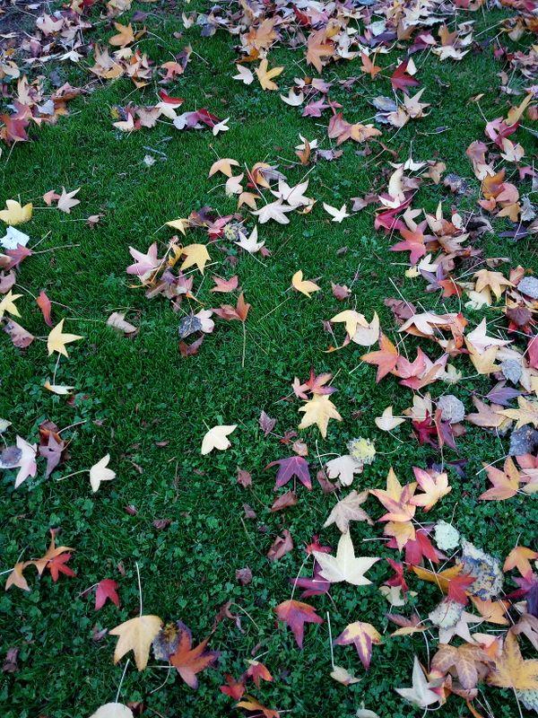 November gives you its carpet thumbnail
