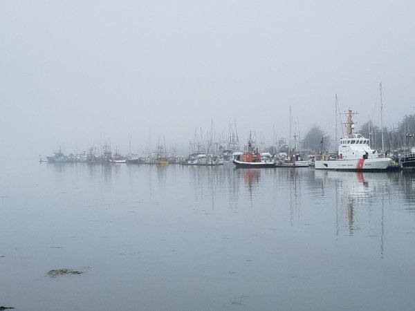 Morning fog on the marina thumbnail