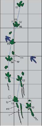 20110520083152dinosaur-tracks.jpg