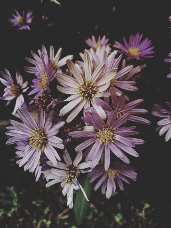 Sombre Floral thumbnail