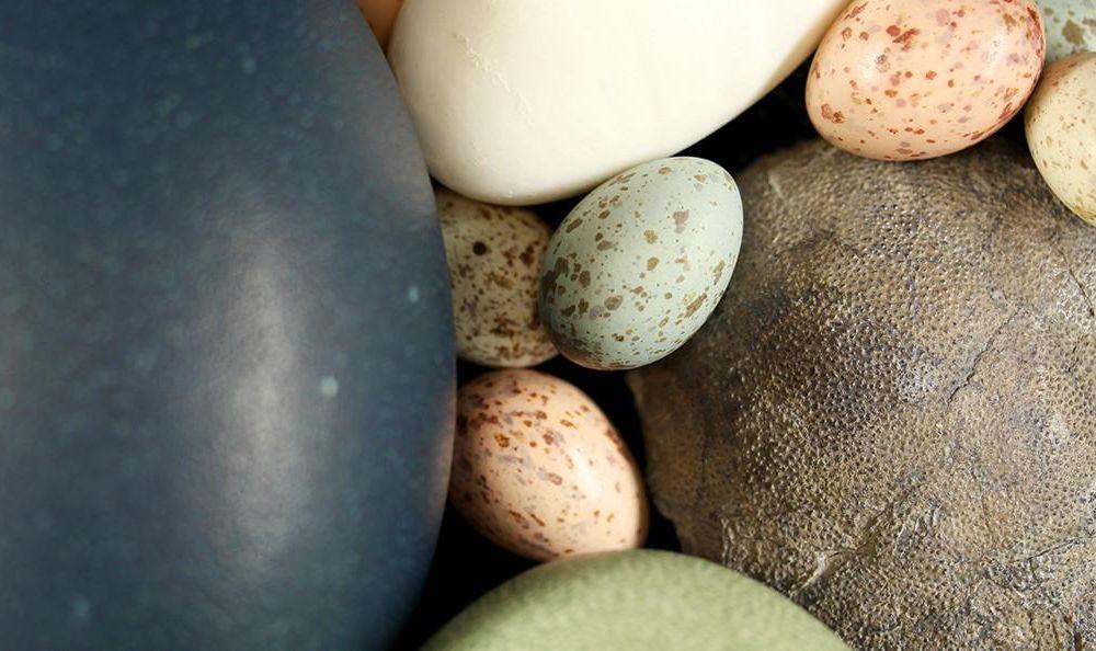 dinosaur_egg_with_bird_eggs.jpg