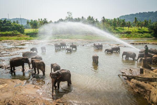 Elephant wash thumbnail