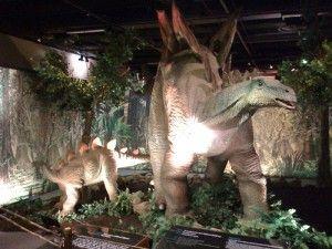 20110520083137cincinnati-museum-stegosaurus-300x225.jpg