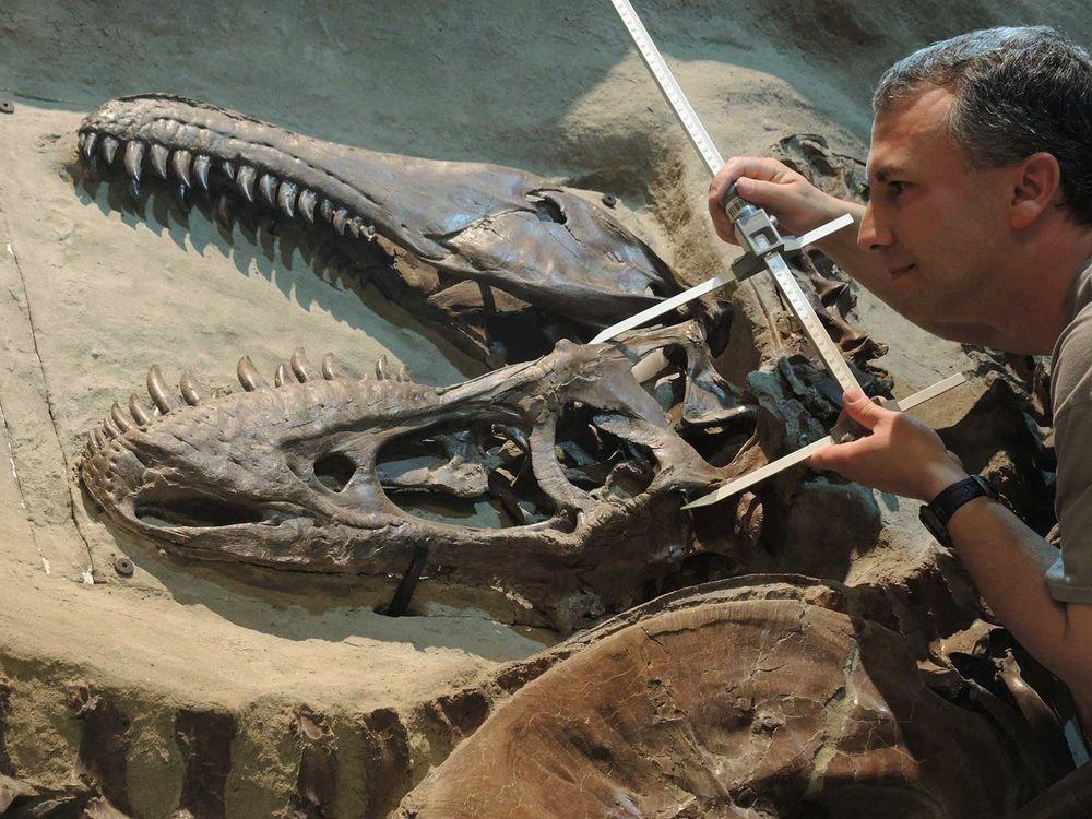 Gorgosaurus Jaw