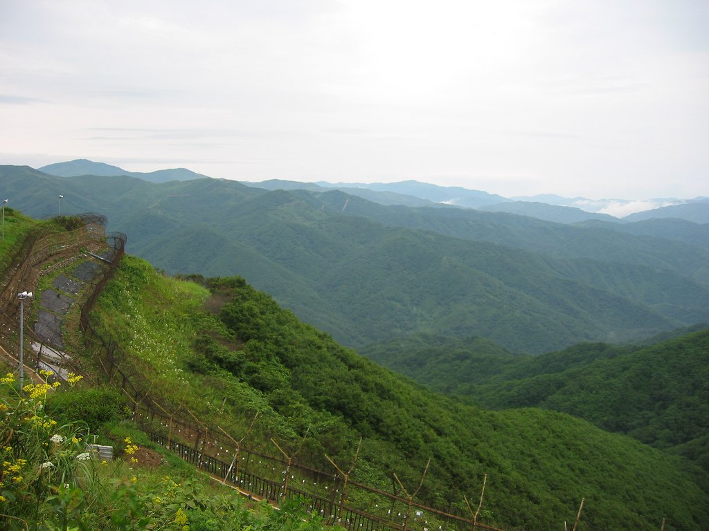 How Korea's Demilitarized Zone Became an Accidental Wildlife Paradise
