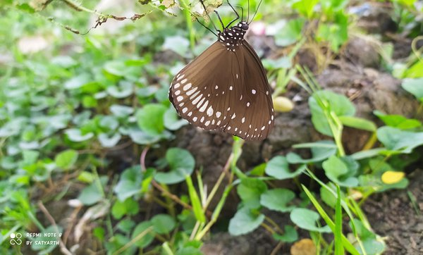 A resting butterfly. thumbnail