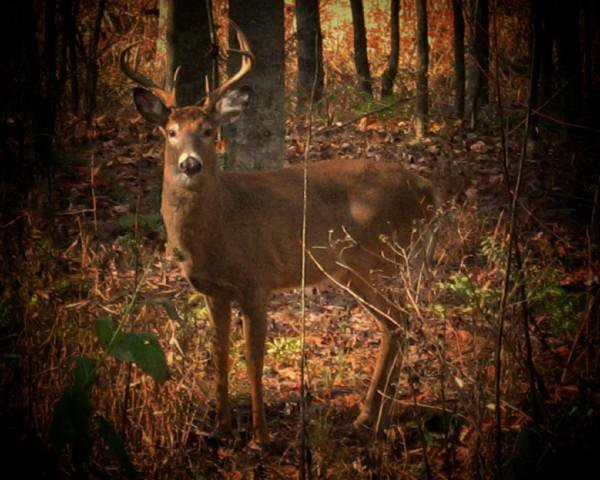 Deer in Park thumbnail