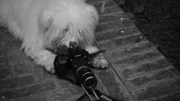 The Unusual Photographer thumbnail