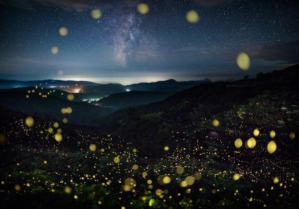Starry summer night thumbnail