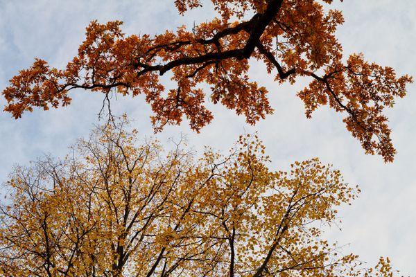 Autumn Gold thumbnail