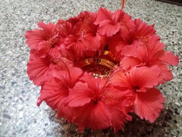I love Hibiscus Flowers  thumbnail