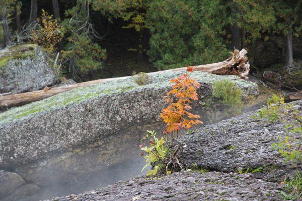 Fall Foliage at Sandstone Falls thumbnail