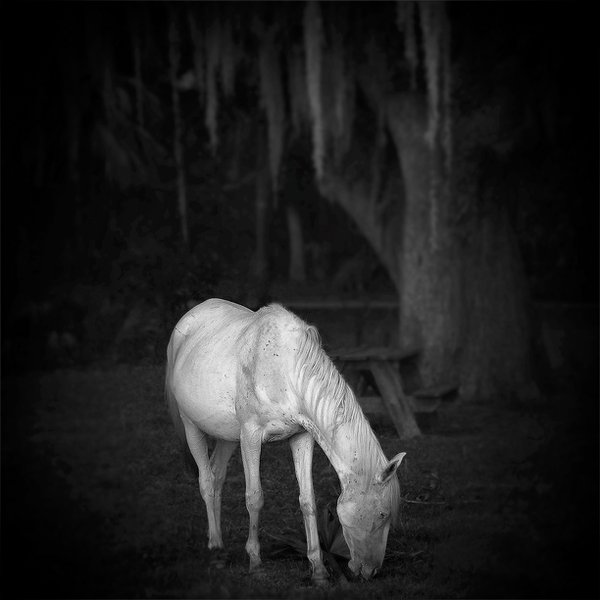 Albino Horse on Cumberland thumbnail