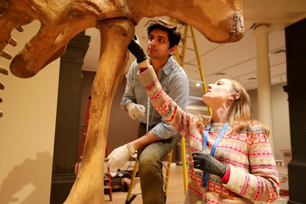A photograph of two people inspecting a mastodon.