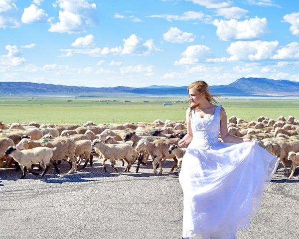 Bride with a Herd! thumbnail