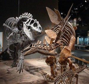 20110520083239631px-DMSN_dinosaurs-300x284.jpg