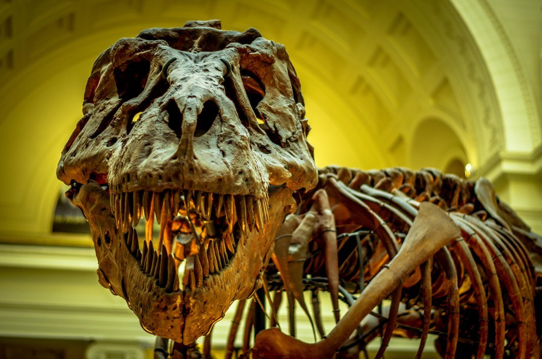 How We Elected <i>T. rex</i> to Be Our Tyrant Lizard King