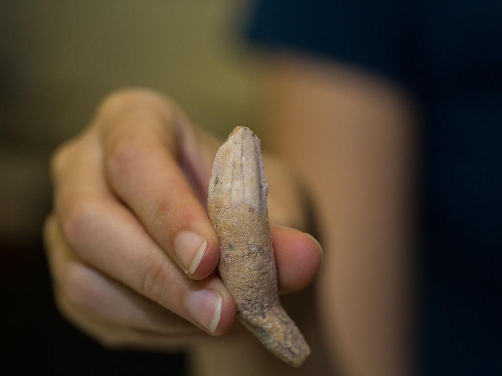 Bone in hand