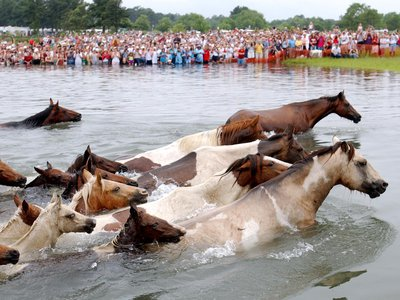 """The ponies of eastern Maryland and Virginia, seen here in 2002, were made famous in the book """"Misty of Chincoteague."""""""
