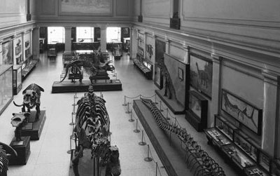 """The Dinosaur Hall was originally called the """"Hall of Extinct Monsters"""" (seen here in a photograph from the 1930s) when the Natural History Museum opened in 1910."""