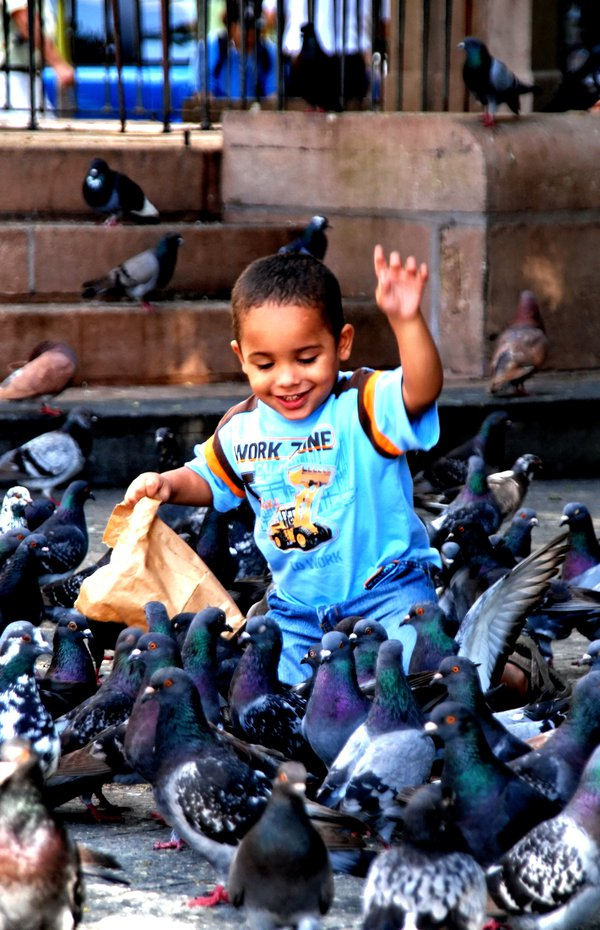 Boy feeding pigeons in Old San Juan thumbnail