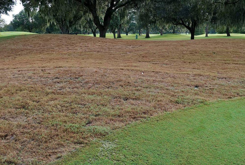 Lawn Devastation