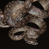 For the First Time in 133 Years, a New Species of Boa Was Discovered in the Dominican Republic icon