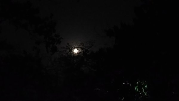 The Witch Moon thumbnail