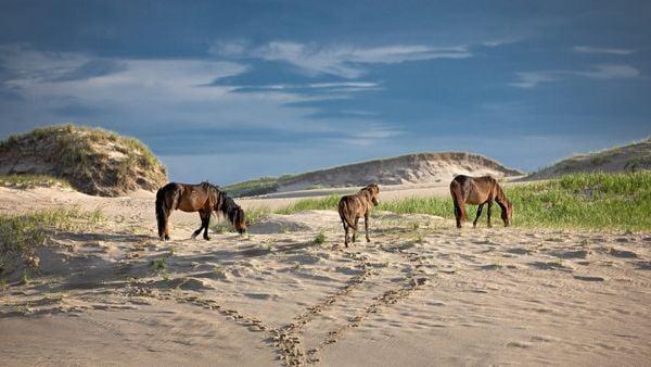 Family of Three wild horses thumbnail