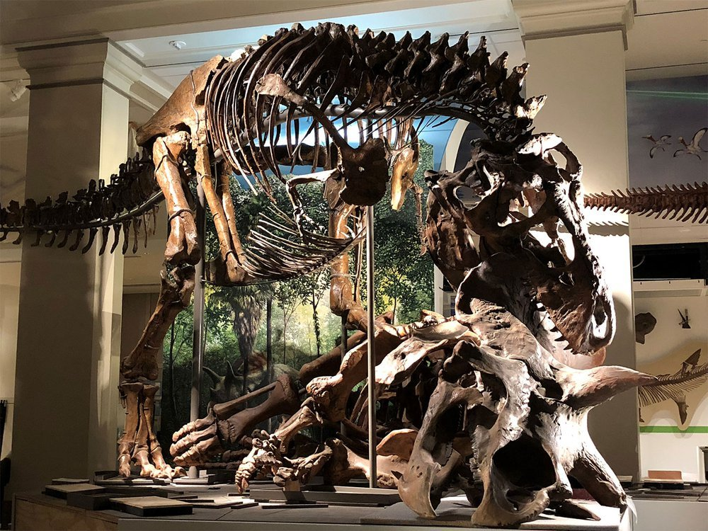 Tyrannosaurus rex was first discovered in 1900, and named in 1905. But not much was known about how it lived or died. (USNM 555000 and USNM 500000, Smithsonian)