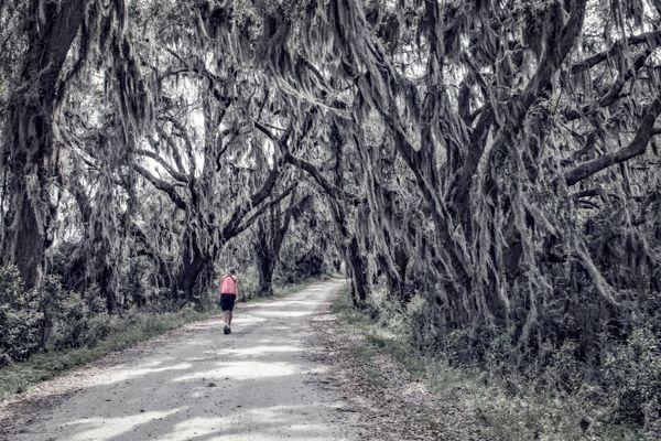Walker in Mossy Forest thumbnail