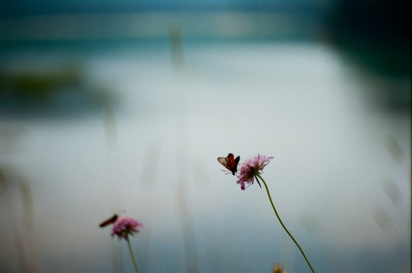 Flora and Fauna of Black Lake on Durmitor thumbnail