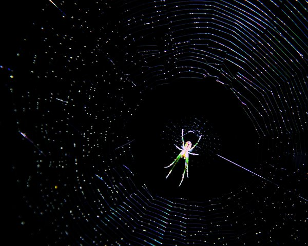 A green spider in W.B. Jacobs on St. Patrick's Day thumbnail