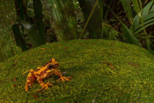 Tree Frog on an Algae-Covered Leaf thumbnail
