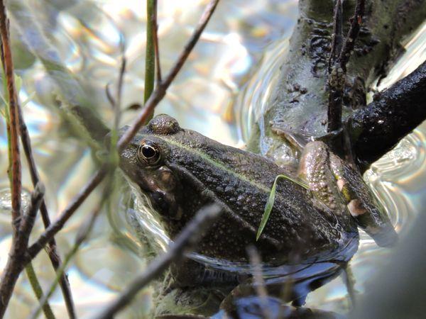 A frog sitting thumbnail