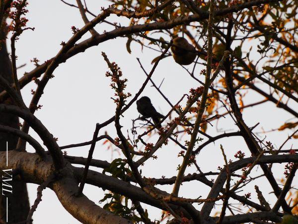 Sunsetbird thumbnail