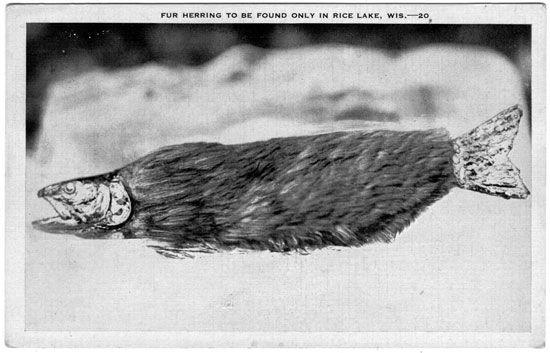 Fur herring